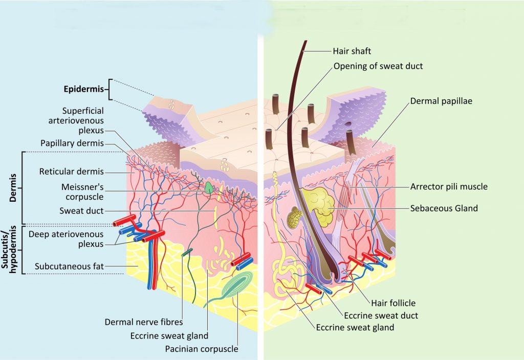skin rashes from hepatitis c - Hepatitis C Treatment